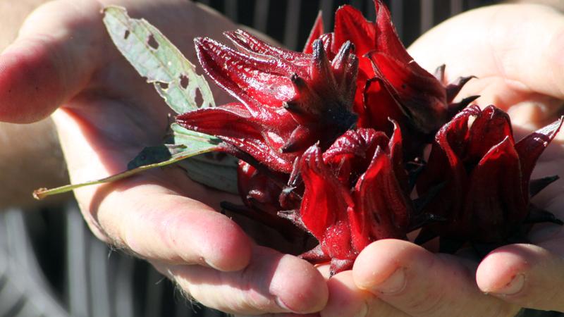 Delacour Organic Herbs