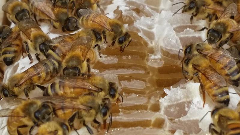 Hum Honey