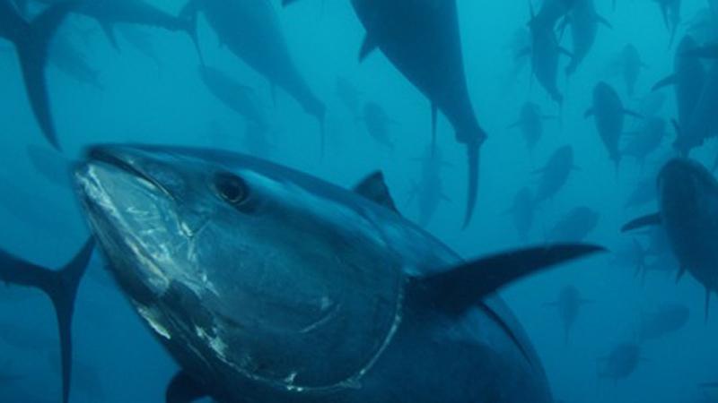 Walker Seafoods Australia