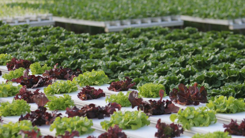 Salads at Palmwoods