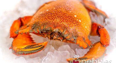 Fraser Isle Spanner Crabs