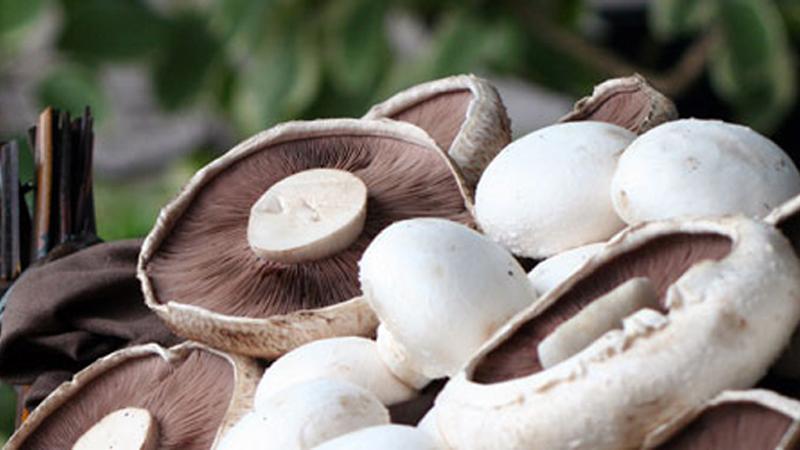 Arama Mushrooms