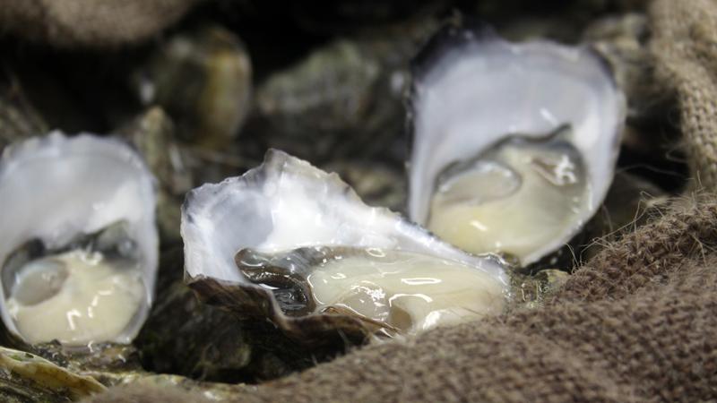 Kooringal Oysters