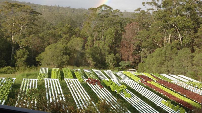 Noosa Leafy Greens