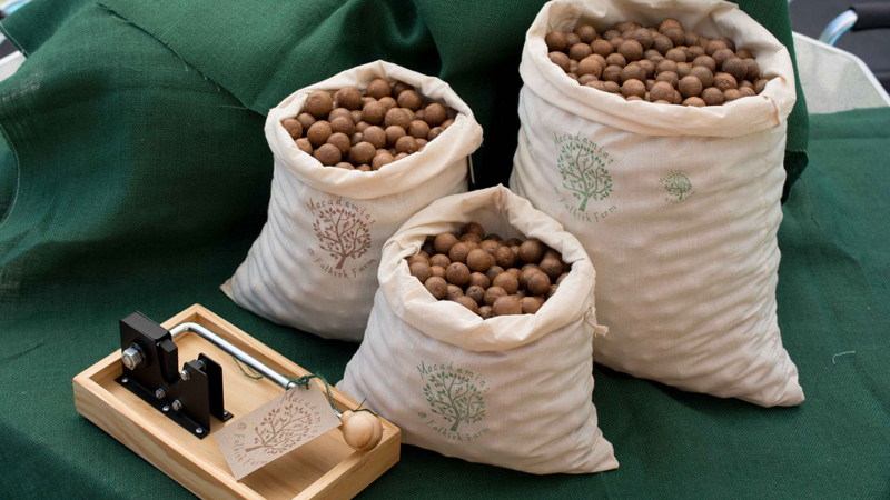 Macadamias at Falkirk Farm