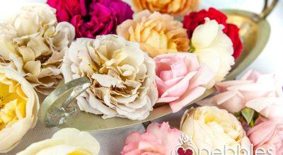 Organica Floret Edible Roses