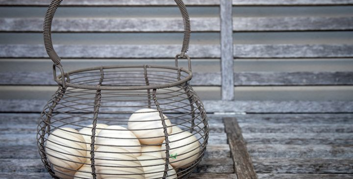 Eumundi Egg and Feather